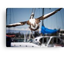 Pelican's successful lift off (in Batemans Bay/NSW/Australia) Canvas Print
