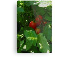 Framed by Leaves ~ Grape Tomatoes Metal Print