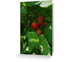 Framed by Leaves ~ Grape Tomatoes Greeting Card
