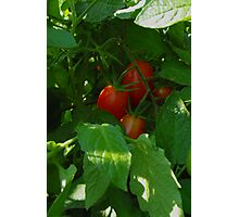 Framed by Leaves ~ Grape Tomatoes Photographic Print