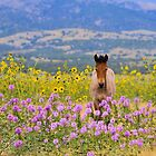 Foal and Flowers by Kelly Jay