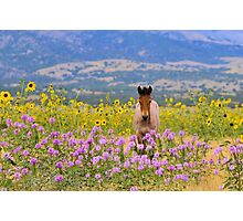 Foal and Flowers Photographic Print