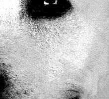 Labrador Retriever Dog Engraving Sticker