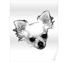 Chihuahua Dog Picture Engraving Poster
