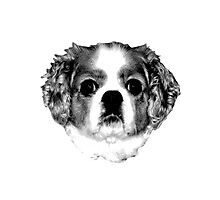 Cocker Spaniel Puppy Engraving Photographic Print
