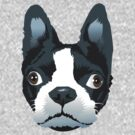 boston terrier by Matt Mawson