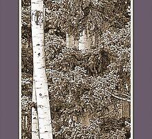 Aspens (Sepia, Plum) by Hannelore Dean