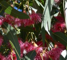 Flowering Eucalyptus Tree Sticker