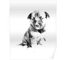 Adorable Husky Dog Puppy Engraving Poster