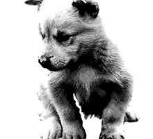 Sad Face Puppy Dog Digital Engraving by digitaleclectic