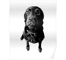 Regretful Dog Puppy Face Engraving Image Picture Poster