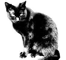 Black Cat. Halloween Black Cat.  by digitaleclectic