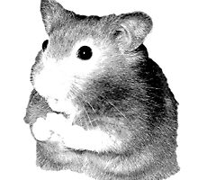 Golden Hamster Digital Image and Engraving by digitaleclectic