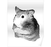 Golden Hamster Digital Image and Engraving Poster