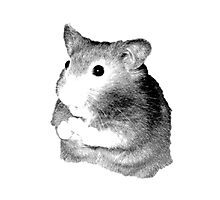 Golden Hamster Digital Image and Engraving Photographic Print