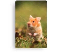 golden hamster pet Canvas Print
