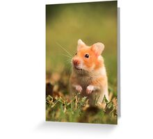 golden hamster pet Greeting Card