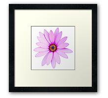 Violet Daisy Framed Print