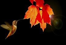 WINNER IN PHOTOGRAPHY CHALLENGE GROUP..AUTUMN LEAVES~ by RoseMarie747