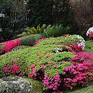 Japanese Garden. by Jeanette Varcoe.