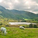Little Langdale by Stephen Knowles