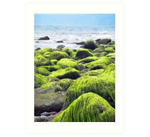 Rocks covered by green seaweed by the seaside. Art Print