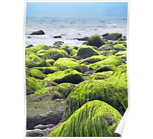 Rocks covered by green seaweed by the seaside. Poster