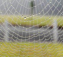 Dew On Spiderweb by relayer51