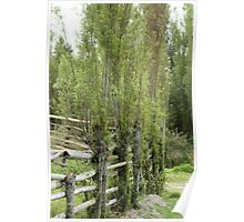 Bamboo Fence in a Pasture Poster