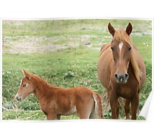 Mare and Colt in a Meadow Poster