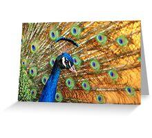 Glamorous peacock Greeting Card