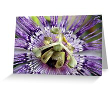 Purple Passion Flower Close Up Greeting Card
