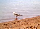 Seagull by goddarb