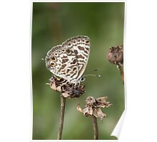 Butterfly in the garden  Poster