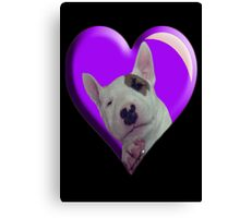 BABY BULL TERRIER Canvas Print