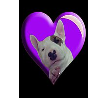 BABY BULL TERRIER Photographic Print