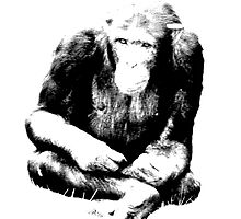 Chimpanzee Sitting in the Jungle. Wildlife Digital Engraving Image by digitaleclectic