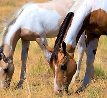 Grazing Pintos by Kellith