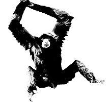 Siamang Gibbon. Wildlife Digital Engraving Image by digitaleclectic