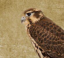 Falcon by Rebecca Cozart
