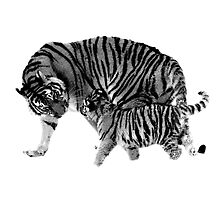 Playful Tigers. Mother and Cub. Wildlife Digital Engraving Image by digitaleclectic