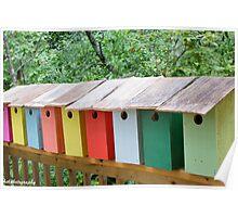 Blue bird boxes Poster