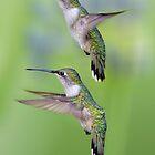 Hummingbird Flight by Bonnie T.  Barry