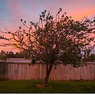 Tree Sunset in Poatina by John Englezos