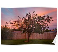 Tree Sunset in Poatina Poster