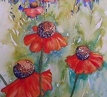 Heleniums by Val Spayne