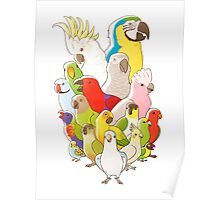 Parrot Party Poster