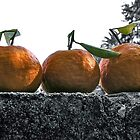 A wall of tangerines 1 by Rebecca Dru