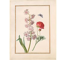 Circle of Madeleine Françoise Basseporte Double Hyacinth and Ranunculus Photographic Print