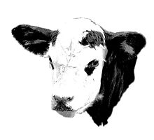 Cow Digital Engraving. Farm Animal Prints and Images by digitaleclectic